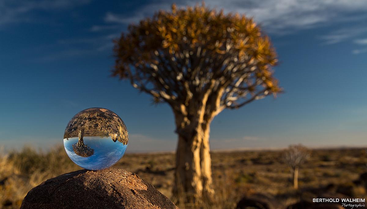 Köcherbaum; Namibia