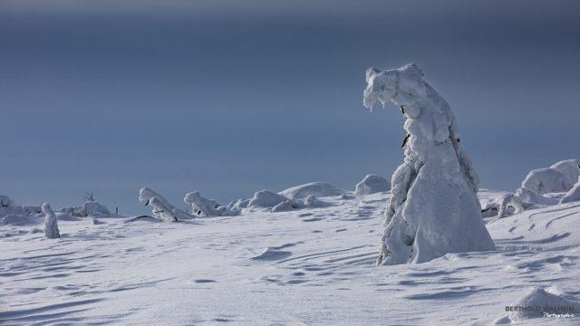 Der Schwarzwald-Eisbär