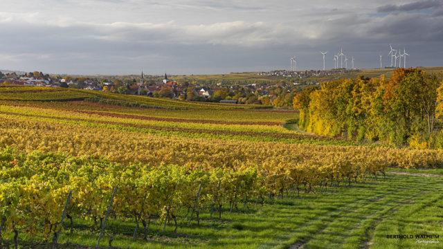Deutschland; Weinbaugemeinde Gundersheim in Rheinhessen