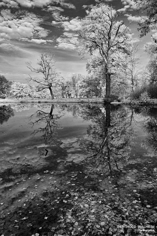 Bäume am See